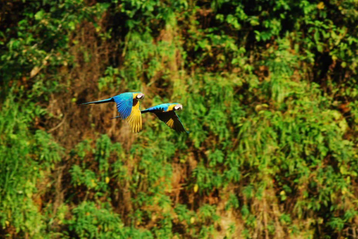 tambopata nationaal park peru