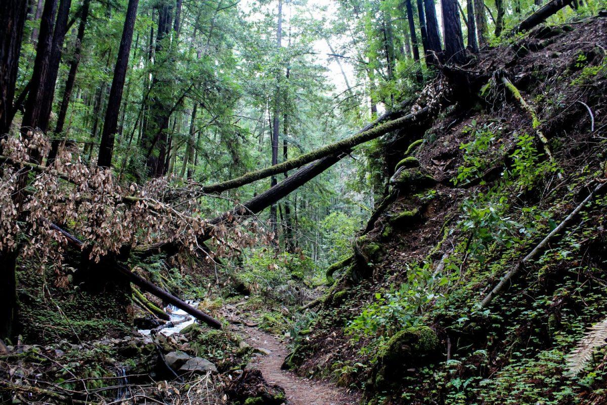 Trail running sport hardlopen trailrunning