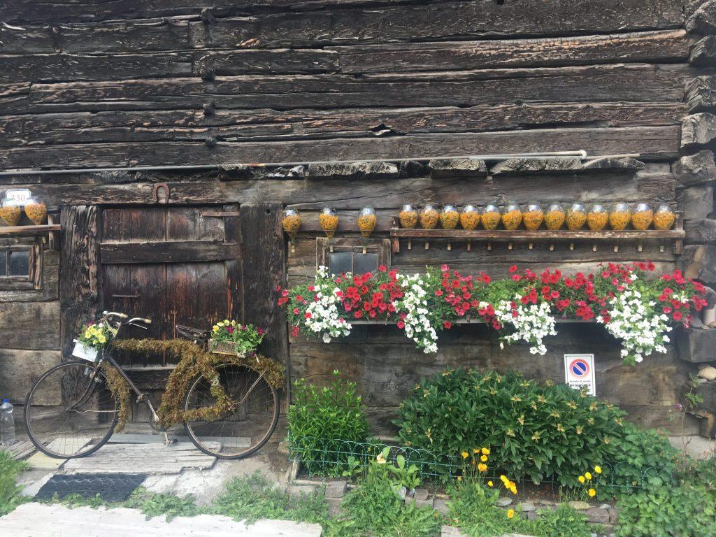 Arnica wordt in glazen potten gedroogd en gebruikt als geneesmiddel, bijvoorbeeld in Arnicazalf