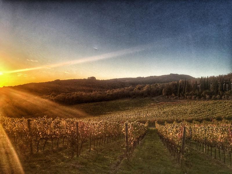 Toscane - Castello Albola - Wijnproeverij - Radda in Chianti