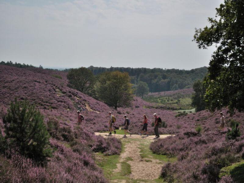 Heidevelden in het Nationaal Park Veluwezoom