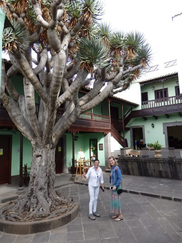 Bouwstijl en boom zijn beide typisch voor Gran Canaria