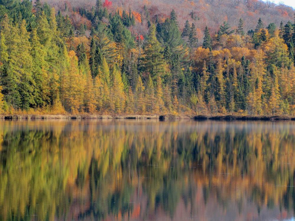 Mizzy Lake Trail Algonquin Indian Summer herfstkleuren