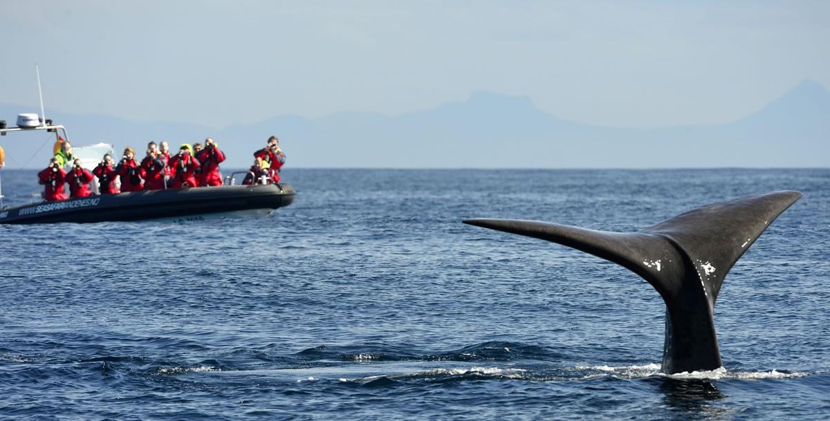 Walvissen spotten