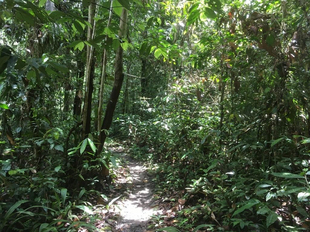 Wandeling naar Camp 5 -Mulu - Pinnacles