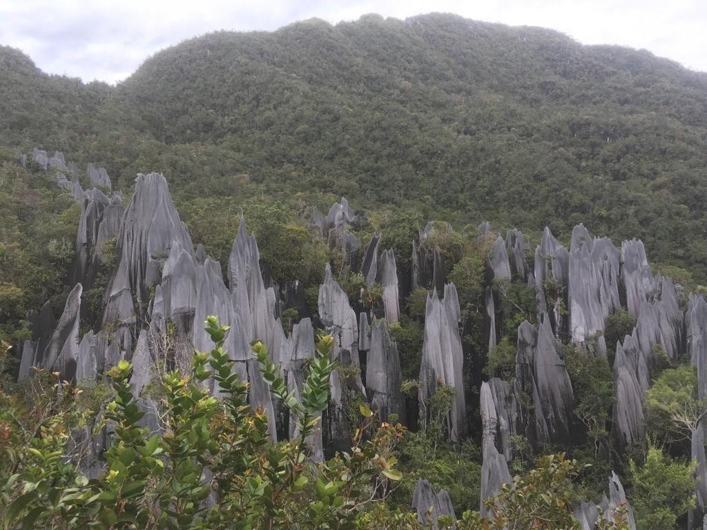 Pinnacles - Mulu