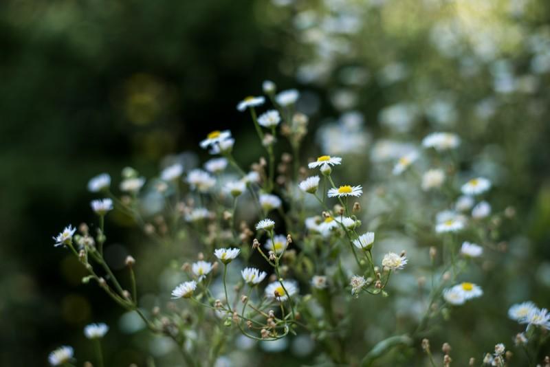 Genoeg wilde bloemen op de wandelroute