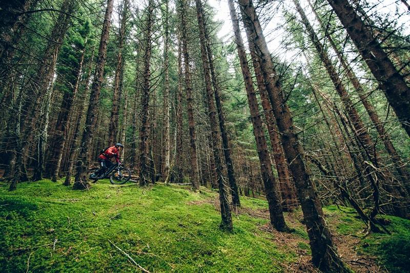 Bossen Noorwegen