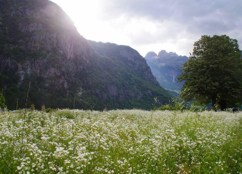 Prachten bloemenvelden in de vallei Theth