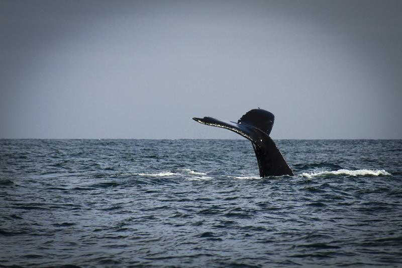 Los Organos Whales