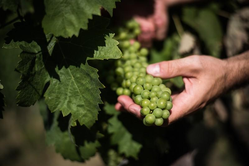 Umbrië, Italië, wijn