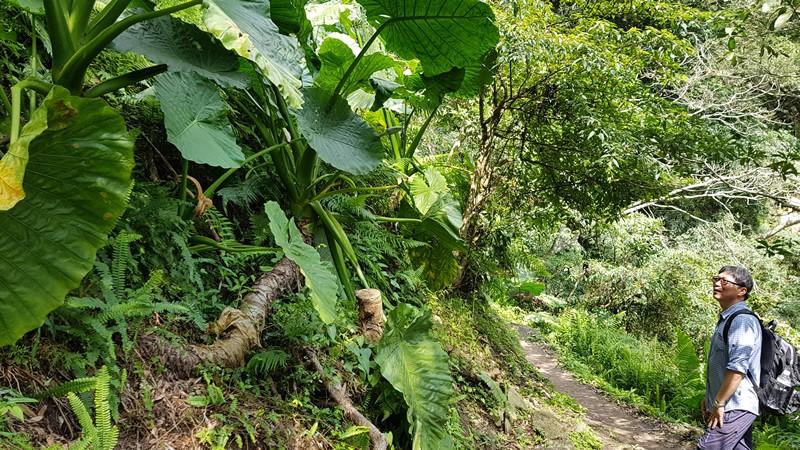 Taiwan Trekking