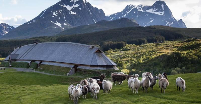 schapenboerderij