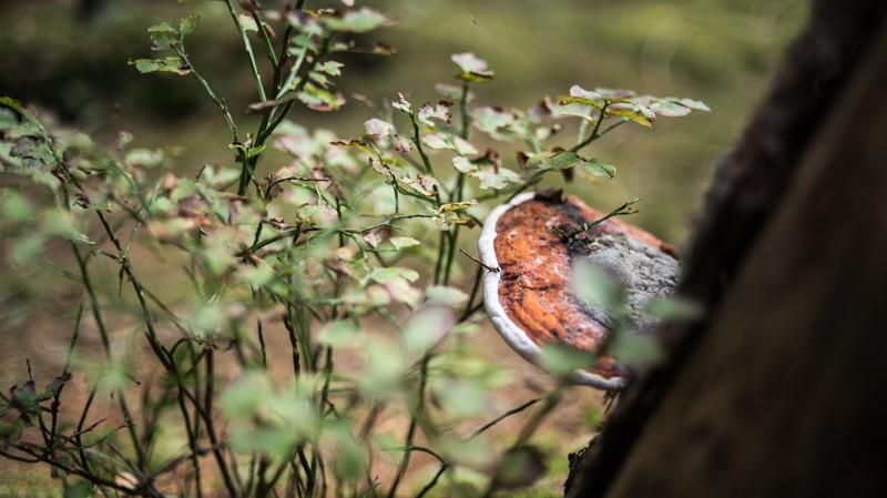 De herfst begon hier écht al | eigen foto: Manja Herrebrugh, Mountainreporters