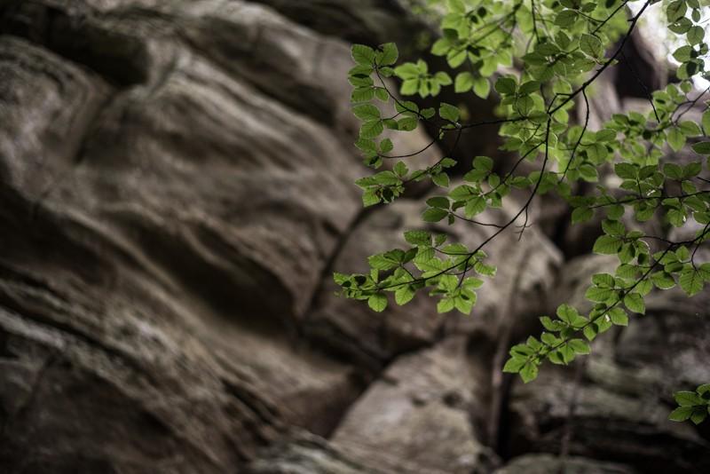 Groen en grijs: dat kwamen we veel tegen | eigen foto: Manja Herrebrugh, Mountainreporters