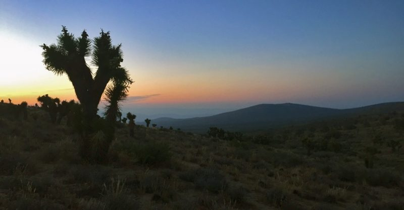 Yoshua Tree Mohave Desert - Copyright André de Jel