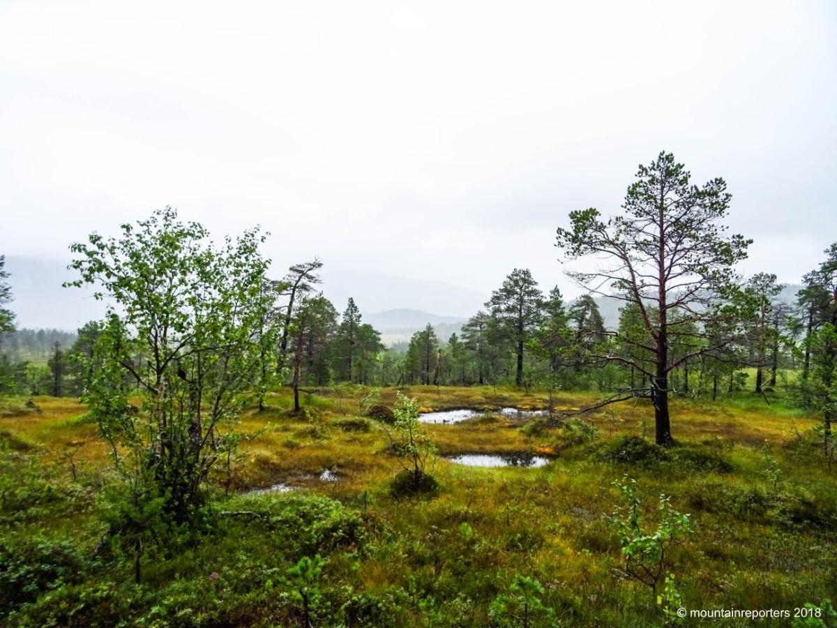 Senja, Noord-Noorwegen. Foto: Edwin Hagenouw