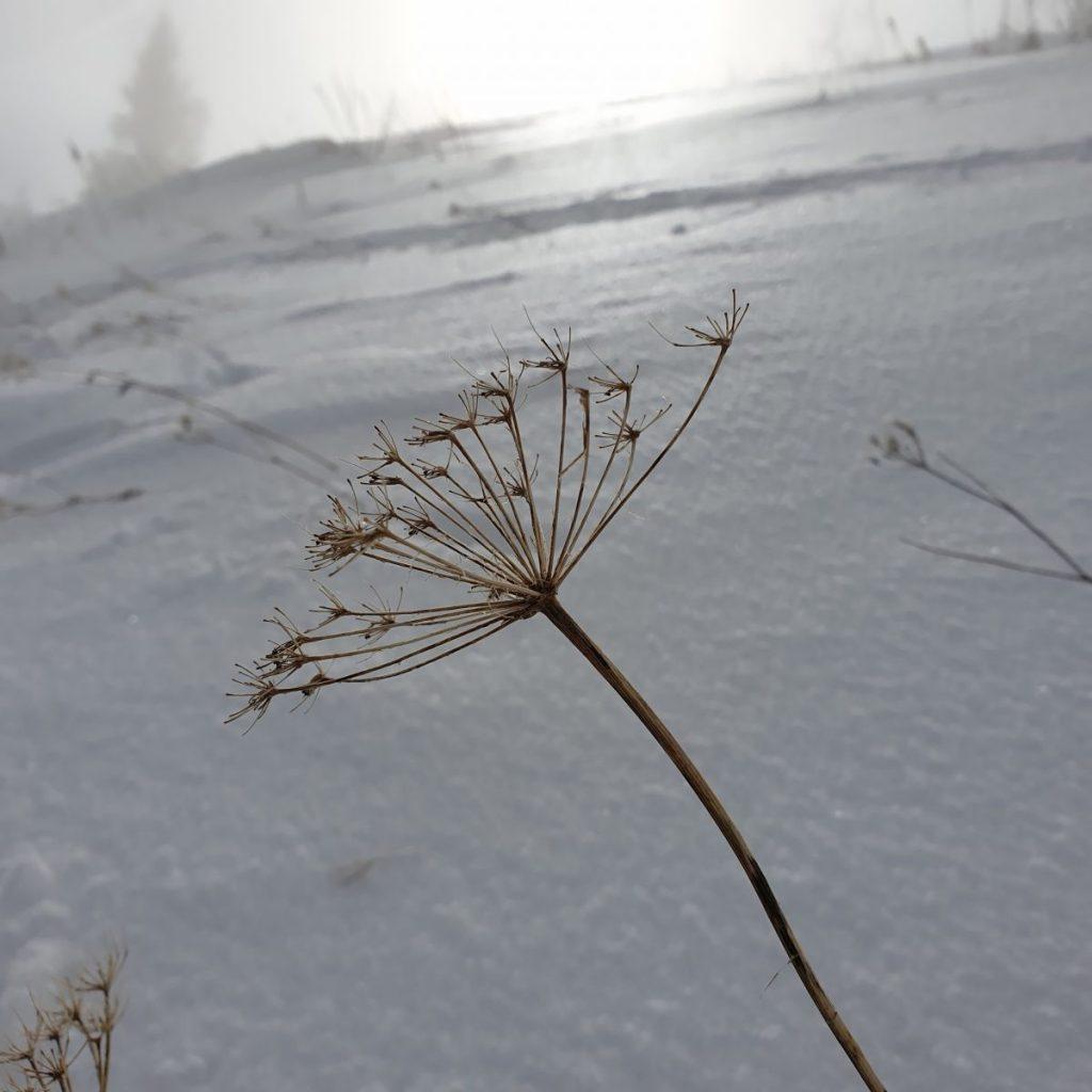 Op de convexe helling kwam de begroeiing boven de sneeuw uit. Foto: Sietske Mensing