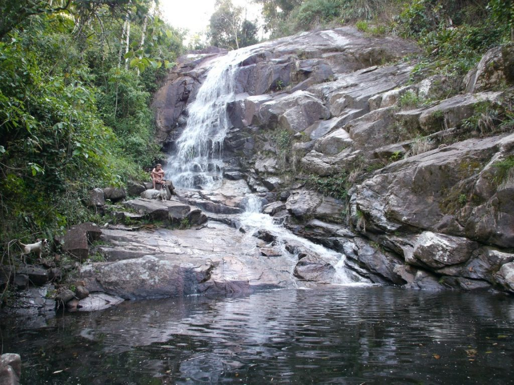 Braziliaanse regenwoud