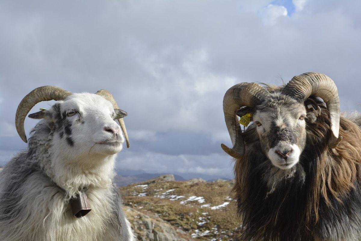 Meet the locals van de Lofoten! - PHAROS REIZEN