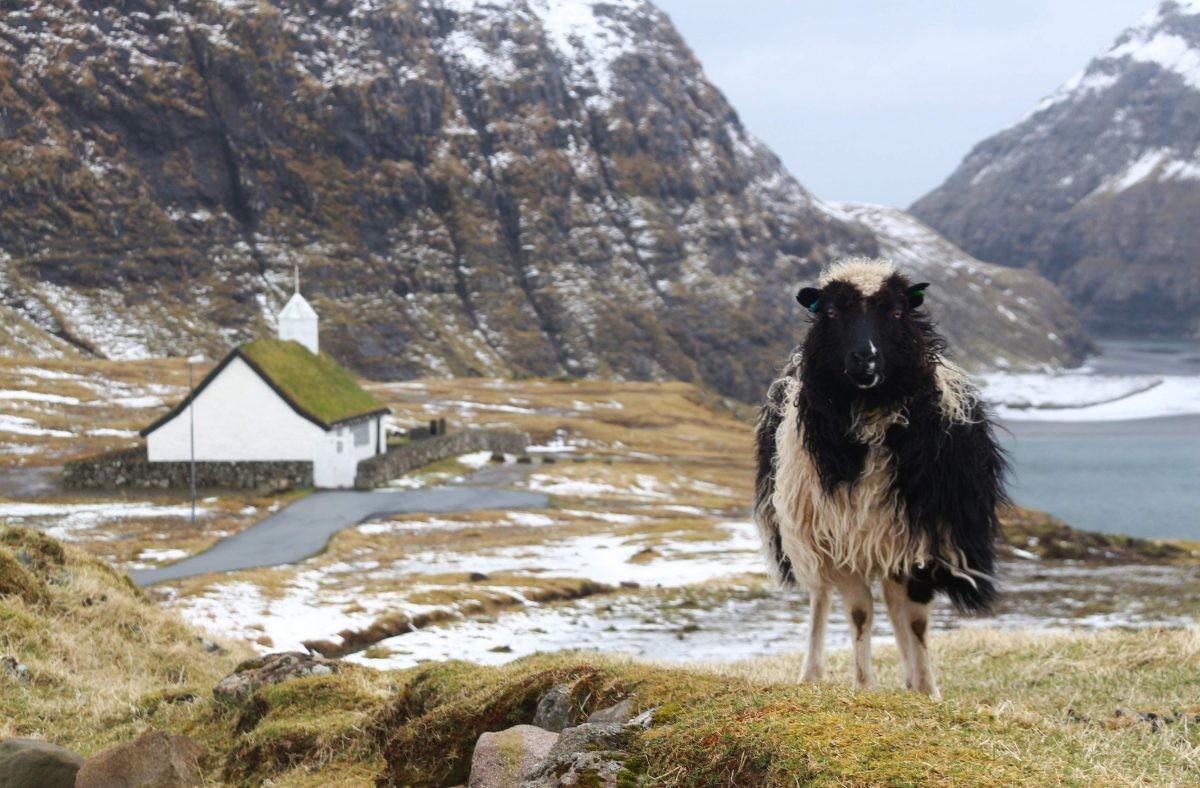 Typische bewonder van de Faeröer eilanden - PHAROS REIZEN
