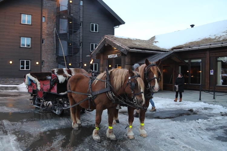 De paarden zijn er klaar voor in Geilo Noorwegen