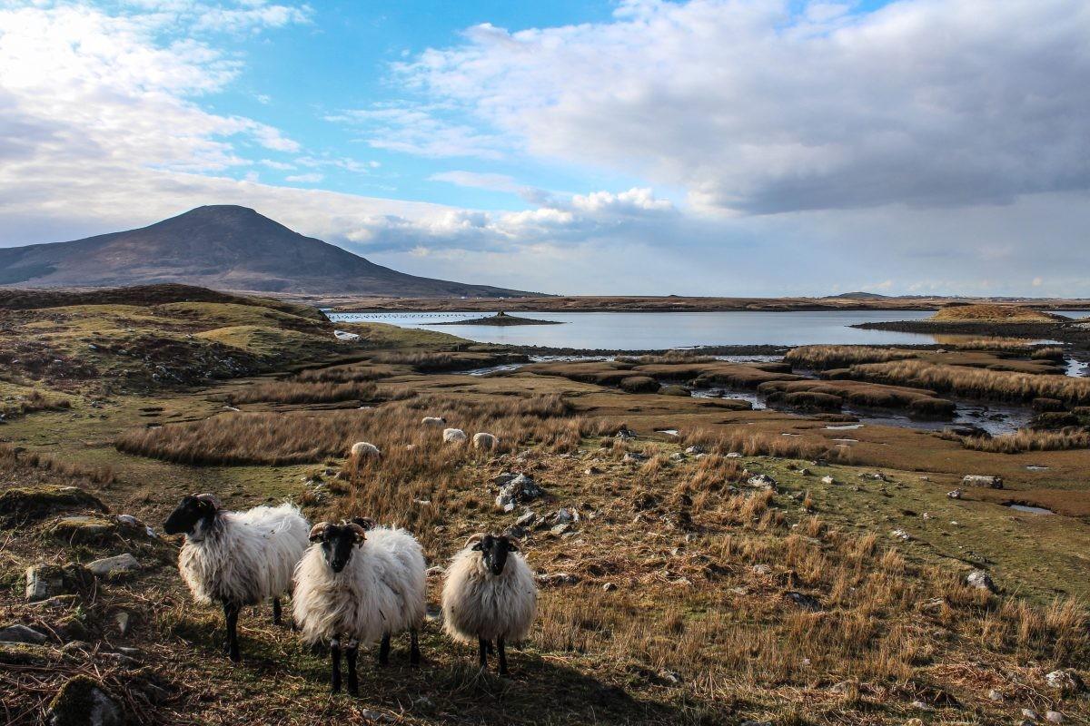 In Connemara word je begroet door deze gezellige bewoners - Foto: PHAROS REIZEN