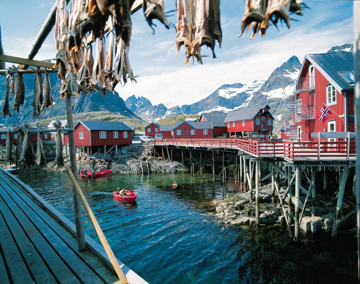 De vis hangt in de buitenlucht te drogen op de Lofoten - PHAROS REIZEN