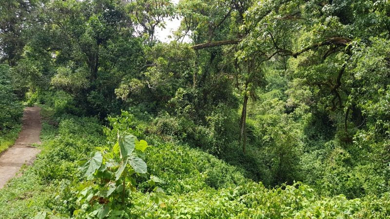 De jungle