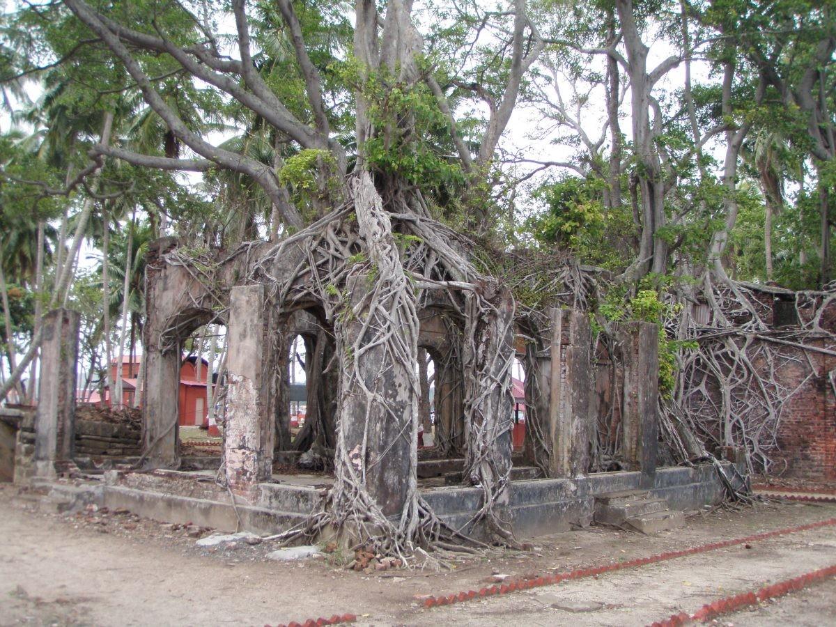 Inmiddels heeft de natuur de overhand. Foto: wikimedia commons