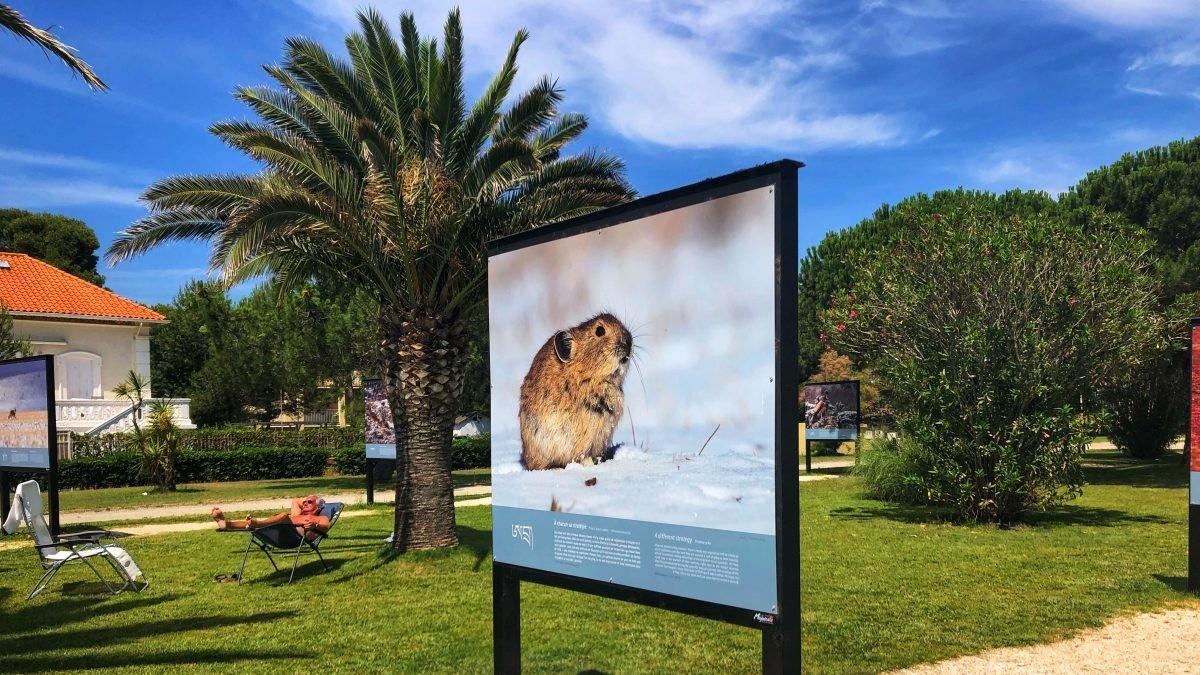 Expositie in Argelès