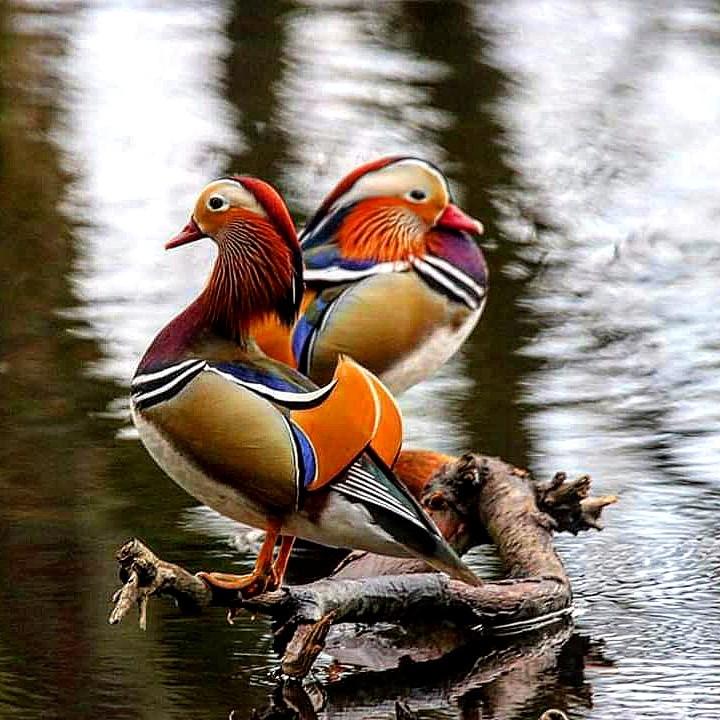 Natuurfotografie tips