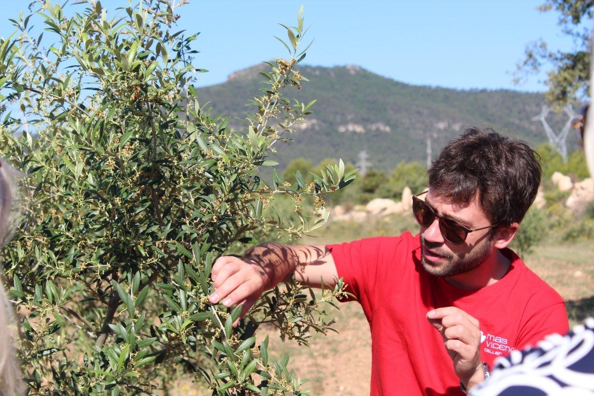 Vicenc neemt ons mee door de wijngaard