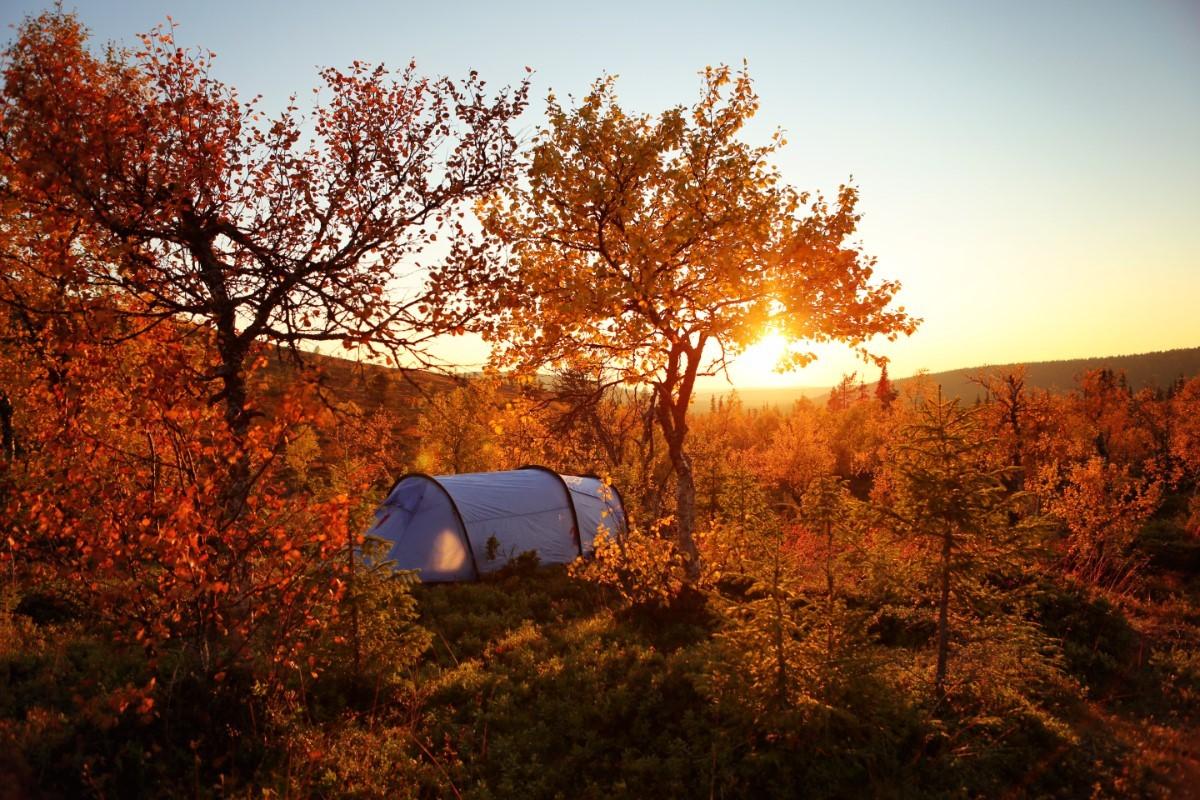Wildernis van Lapland