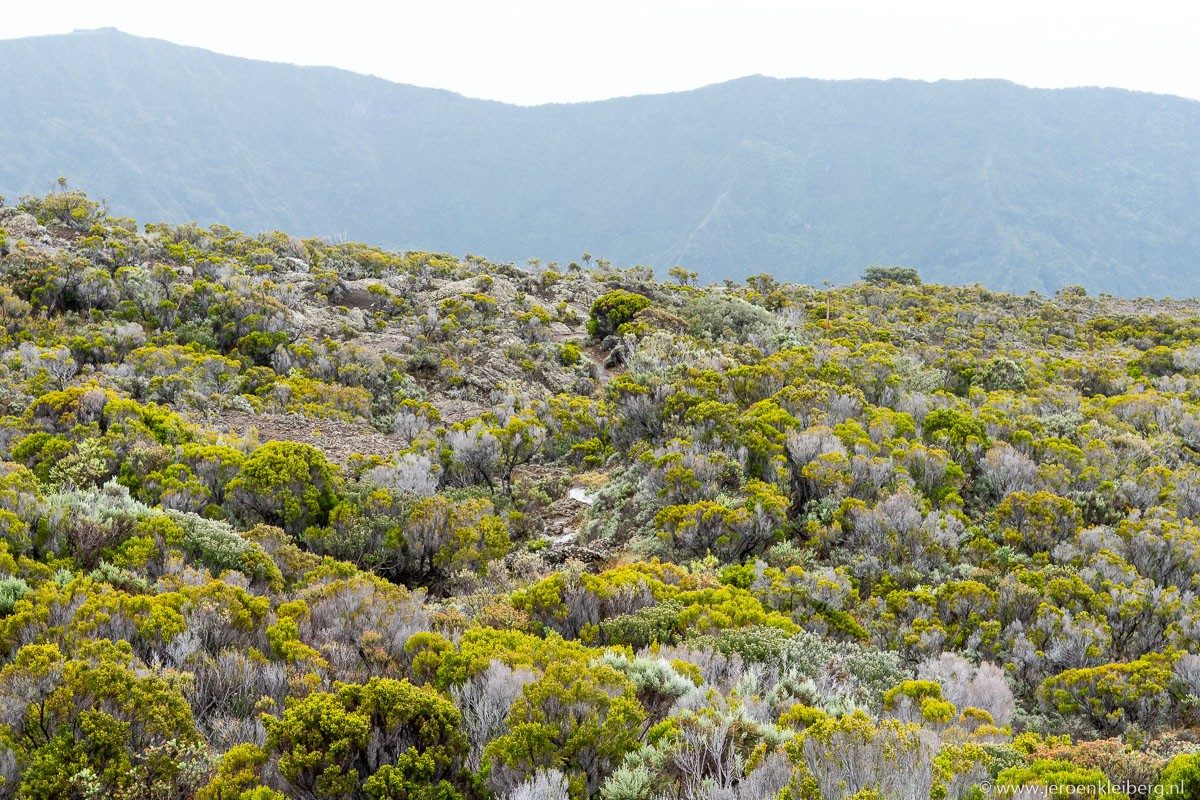 Vegetatie La Reunion