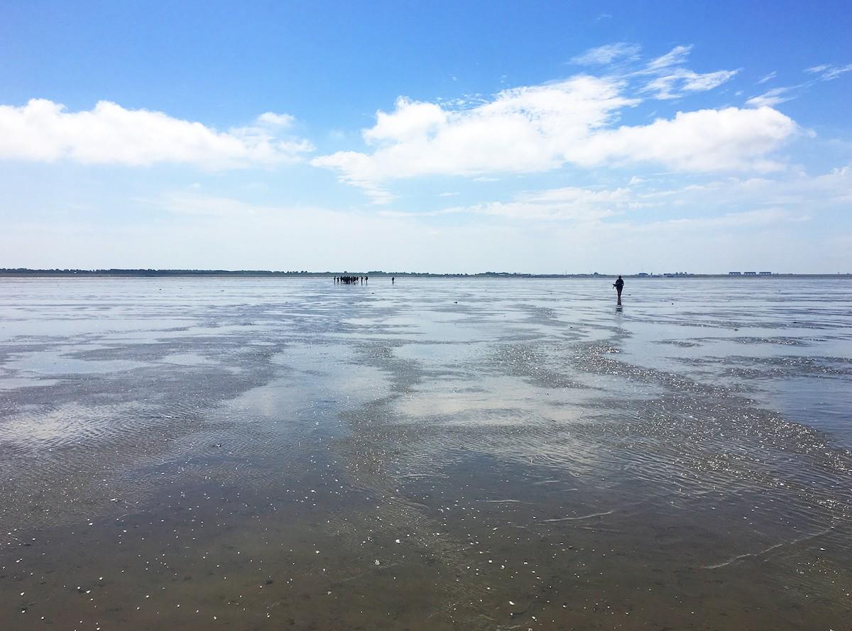 Een wandeling over de zeebodem van de Waddenzee