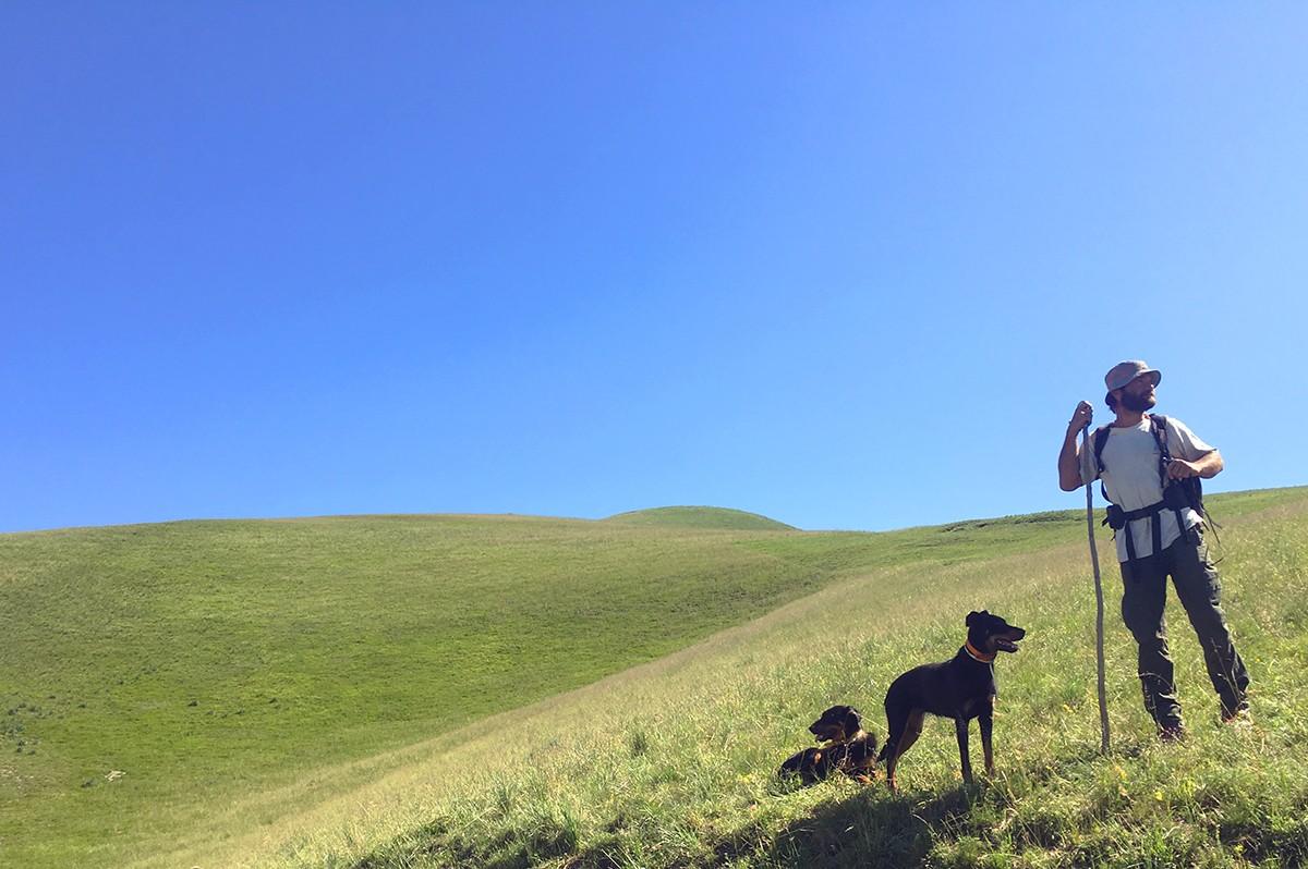 De herder en zijn honden