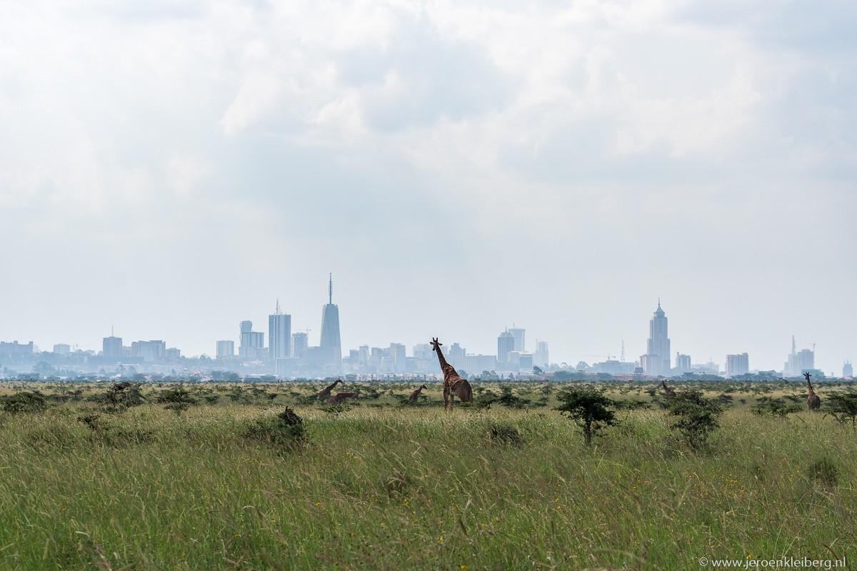 Op safari in Nairobi