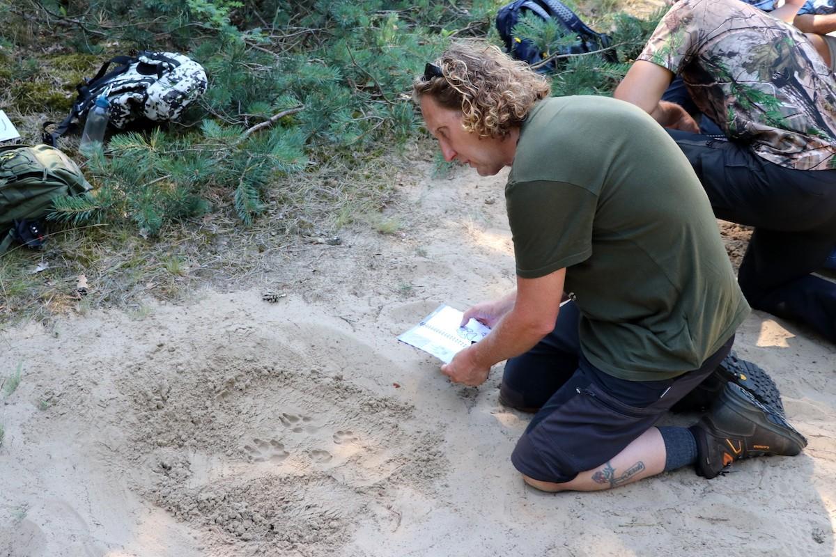 Workshop wolvensporen