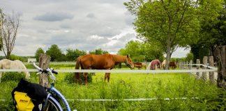 """Mijn """"Iron Horse"""" naast de echte paarden"""