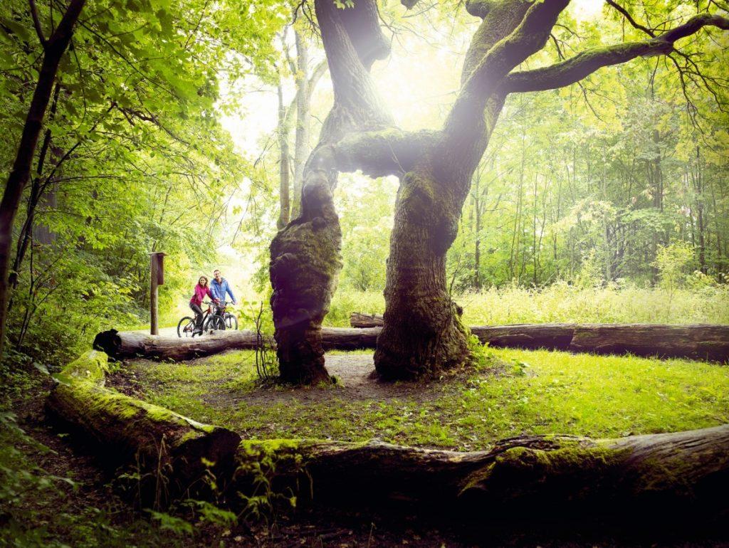 Fietsen door het groene Nationalpark Hainich. Foto: Jens Hauspurg / Thüringer Tourismus GmbH