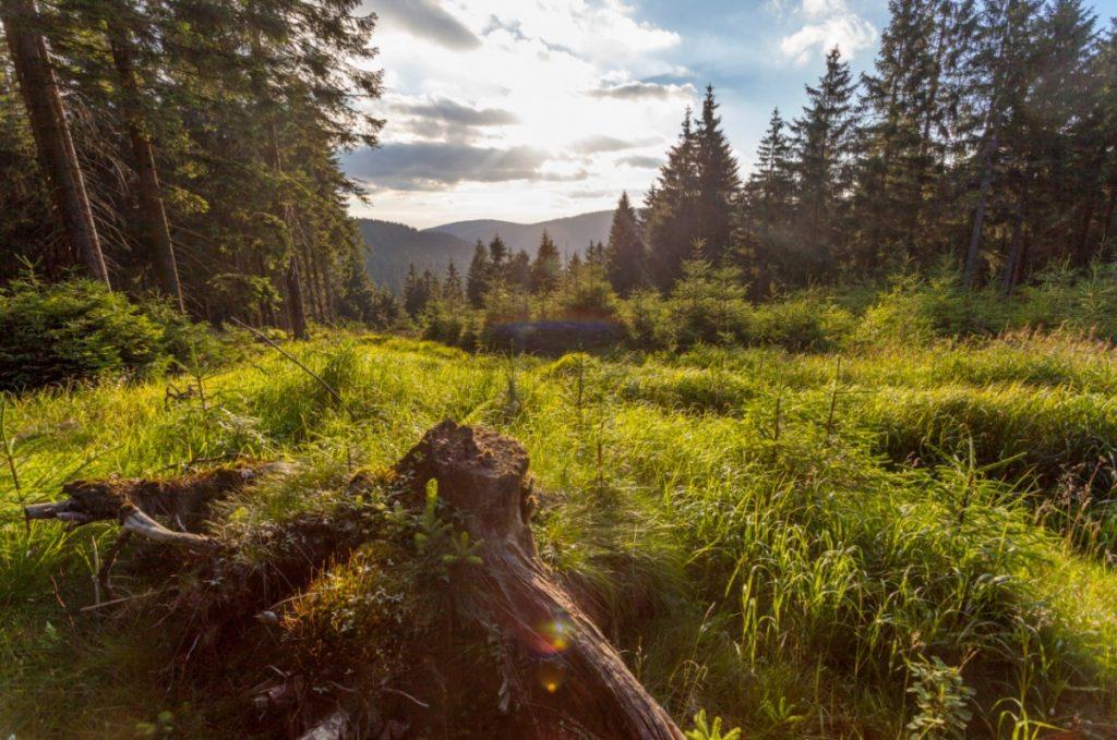 Duitse bossen