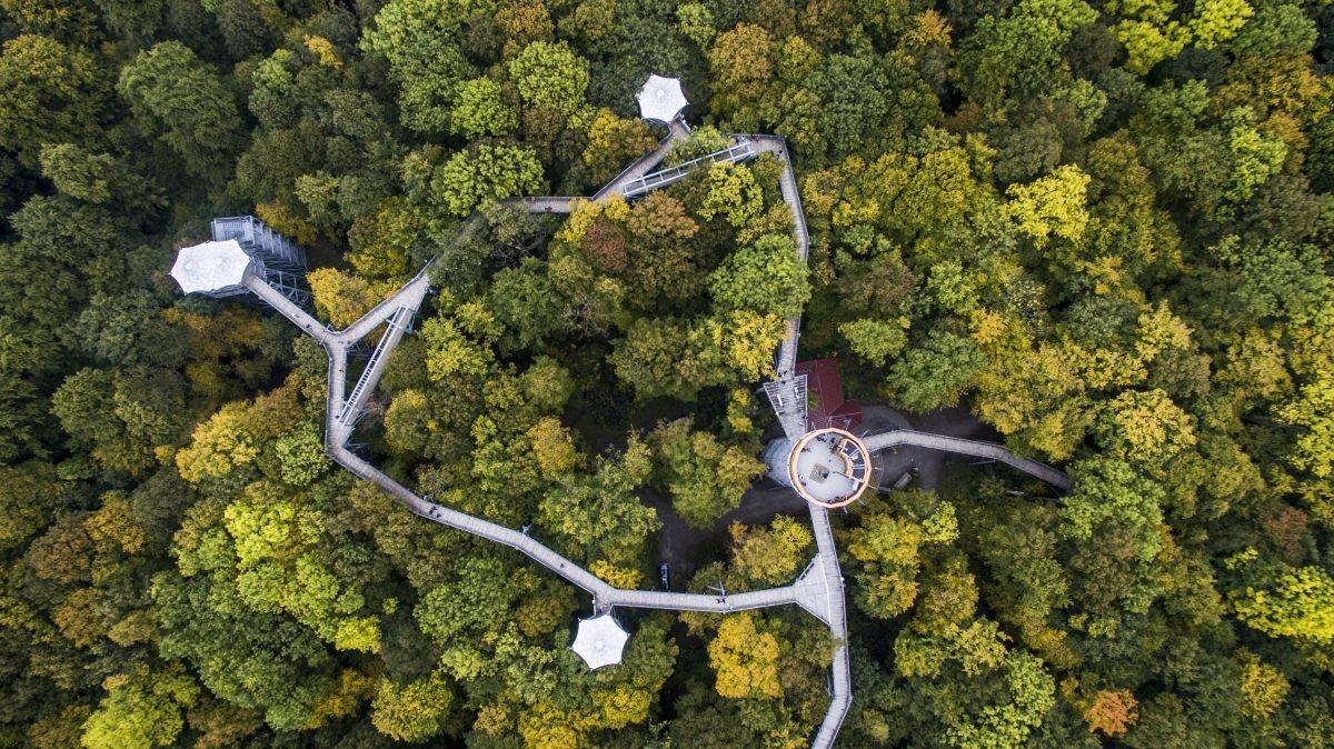 Klim tussen de boomtoppen in het boomkronenpad