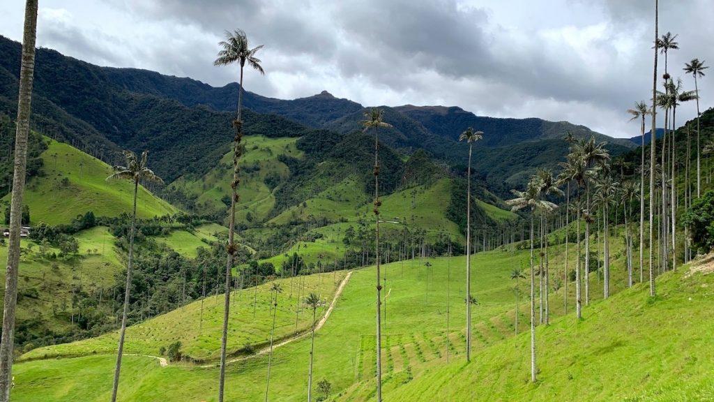 Cocora Vallei waspalmen Colombia. Foto: Dagmar Wolters