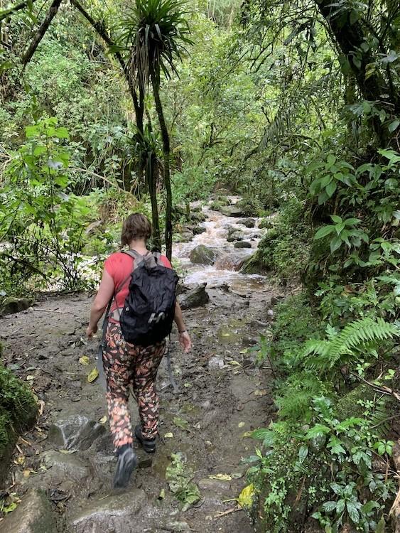 Het nevelwoud in. Nat en zweterig, maar weelderig groen. Cocora Vallei Colombia