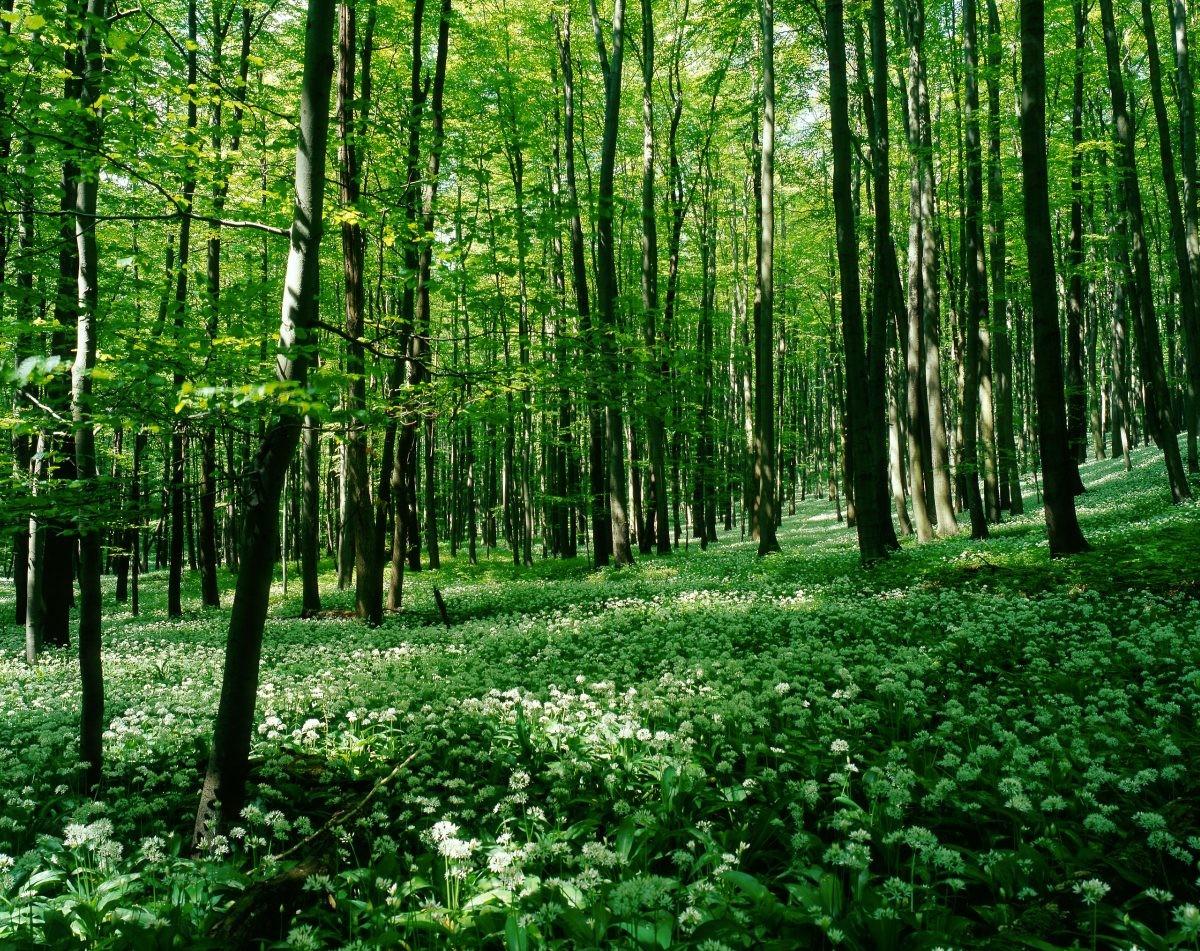 Heerlijk dwalen door het bos. Hier kom je tot rust. Foto: H.-P. Szyszka / Stadt Bad Langensalza / Kur- und Immobilienverwaltung GmbH