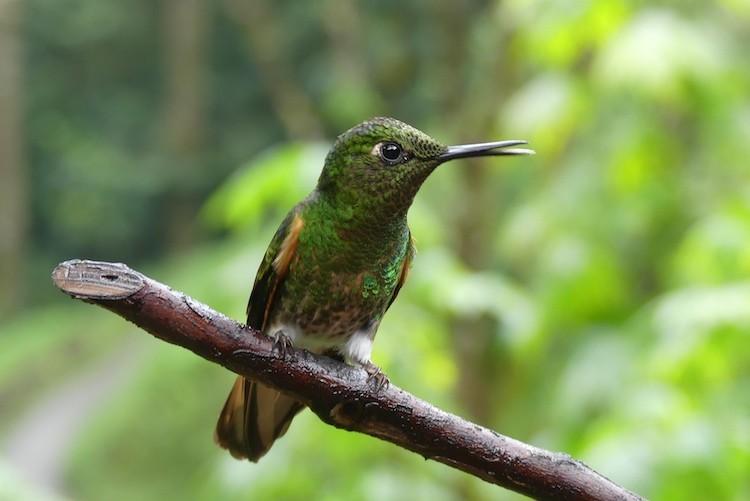 De kolibries laten zich goed fotograferen