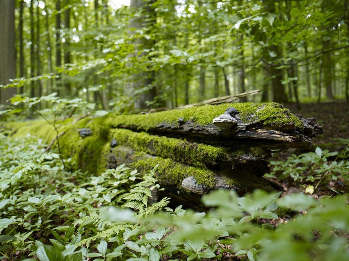 Overweldigend groene omgeving in het Nationalpark Hainich Dipl.-Des. Jens Hauspurg // Weimar