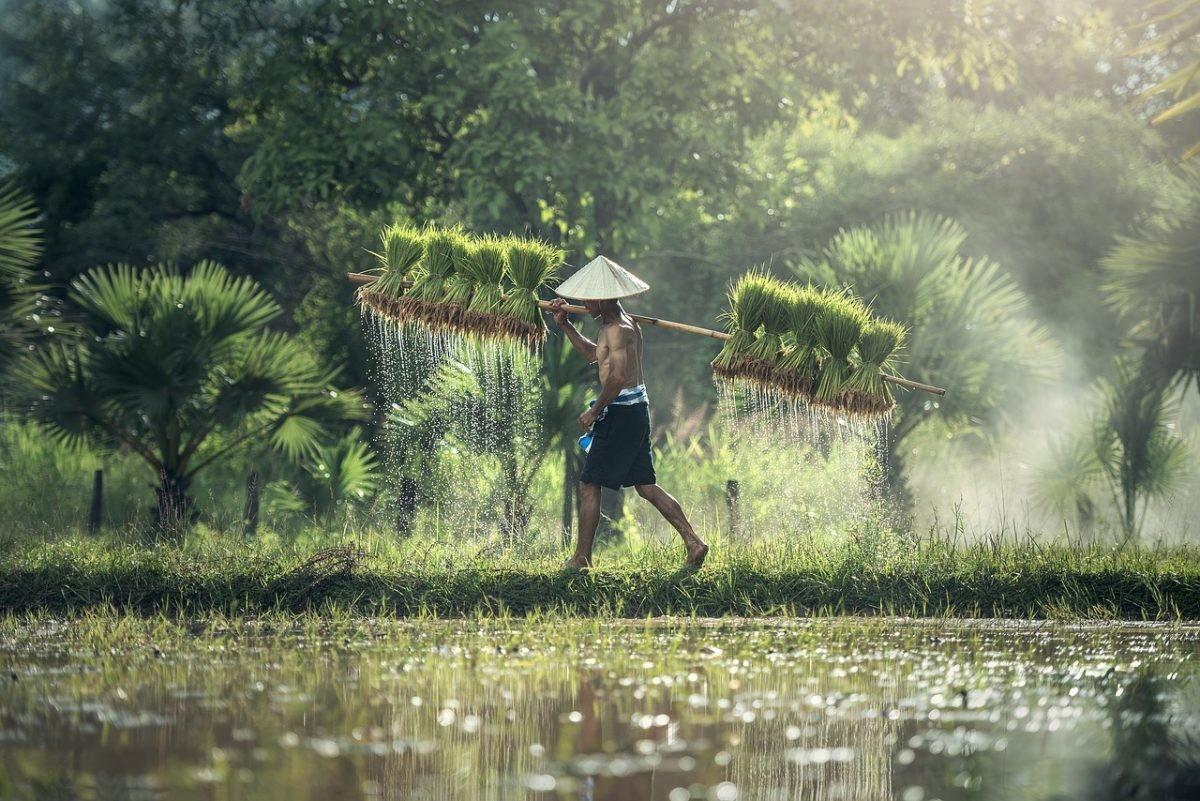 Muggen broeden in stilstaand water. Foto: Pixabay