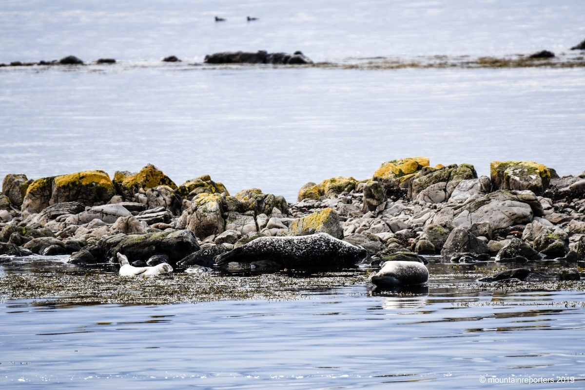 Zeehonden IJsland